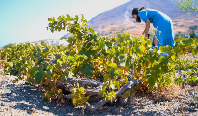 Wine tour on Santorini